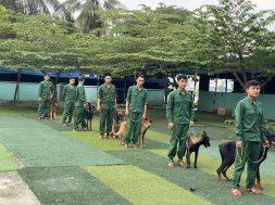Trung tâm huấn luyện chó cảnh uy tín hàng đầu tại Tphcm