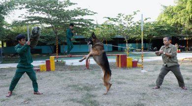 Những giống chó nghiệp vụ có khả năng trông nhà tốt nhất